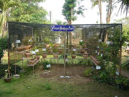 Hierbas y plantas medicinales